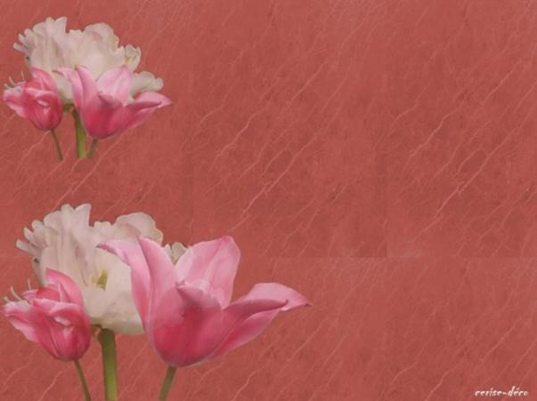nouveau design créé pour vous : tulipes