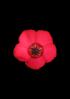 fleur de lin 1
