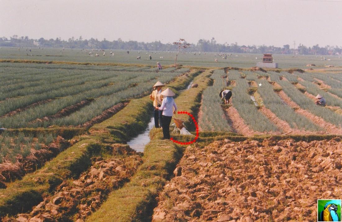 Vietnam photos suite 2