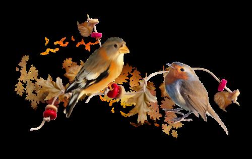 séparateur oiseaux