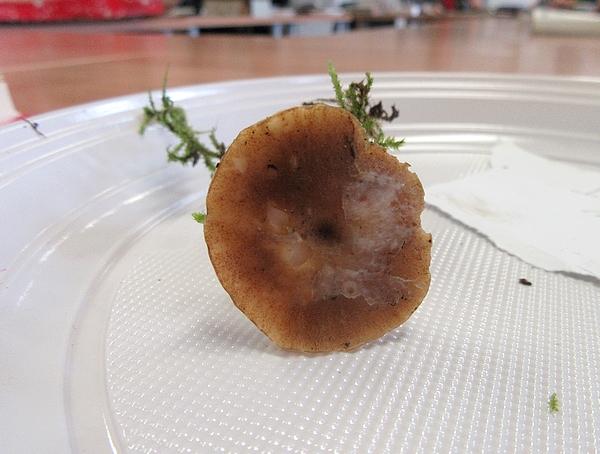Une belle après-midi de détermination de champignons avec mes membres de la Société Mycologique du Châtillonnais