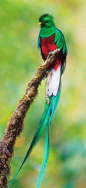 Le Quetzal