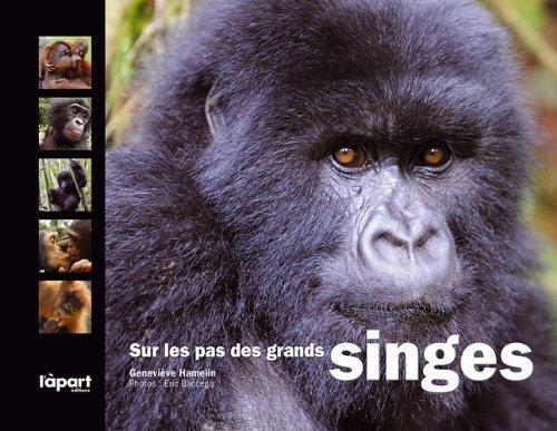 Sur les pas des grands singes