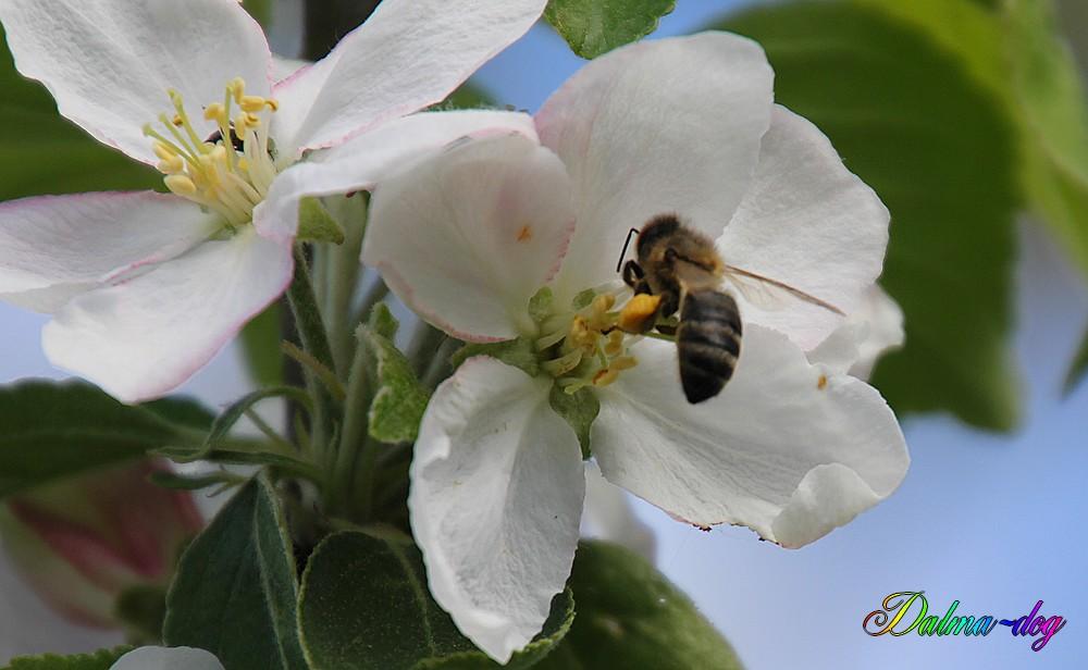 les abeilles ne sont pas nombreuses cette année!!!!!!!!!!!