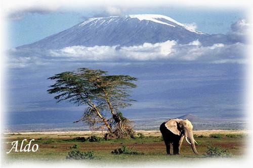 PPS Kilimandjaro