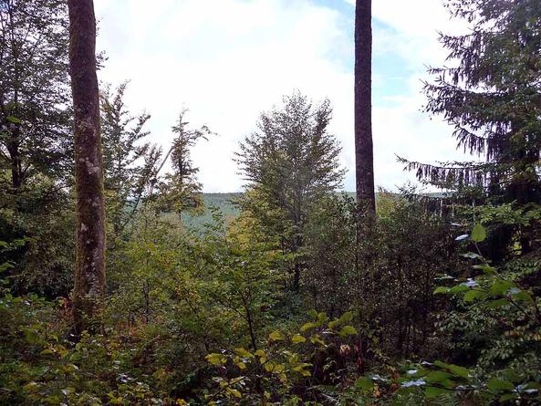 Vézelay - Le Puy en Velay 2010 - Marigny l'Eglise - Montsauche (32km) (2)