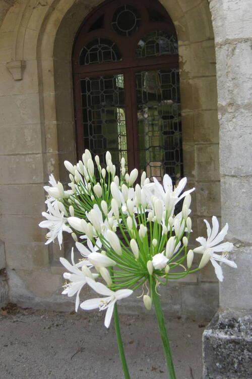 Les fleurs du samedi gérées par Jean Pierre