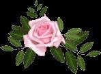 Bouquets-Blancs