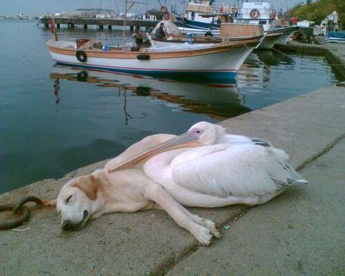 Tendresse animale ... et si les humains les imitaient !