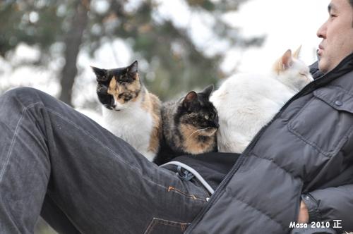 Chats du parc nishi