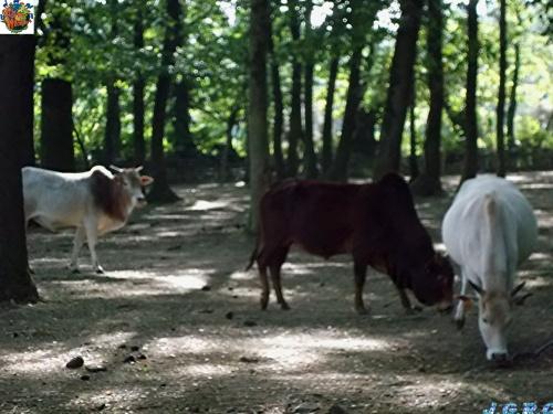FERME DU MONDE CARENTOIR 56 le parc animalier 2/4