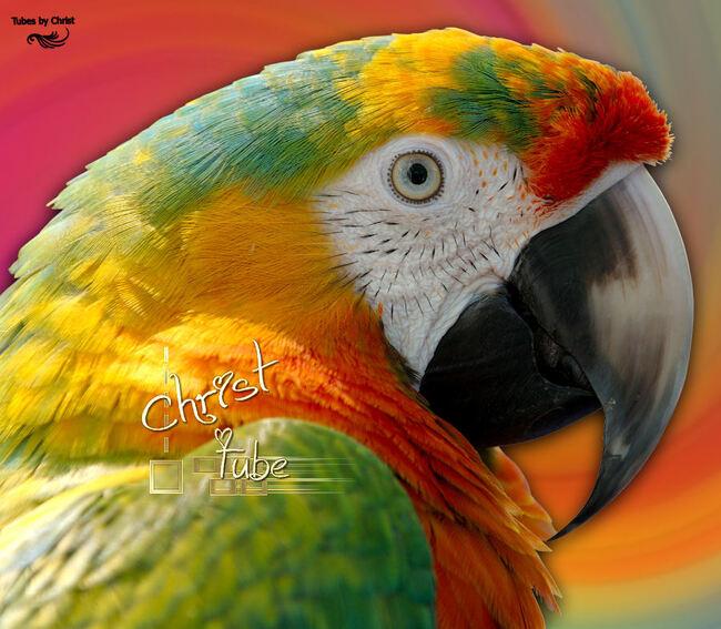 ARA Multicolore.