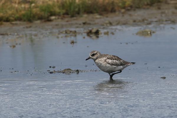 Une journée à la réserve ornithologique du Teich