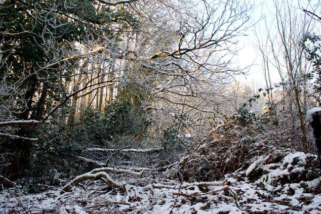 forêt enneigée givrée Vosges du Nord