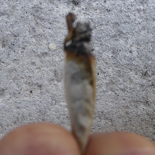 FUMER - 5