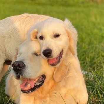 Un chien aveugle et son jeune guide  ...