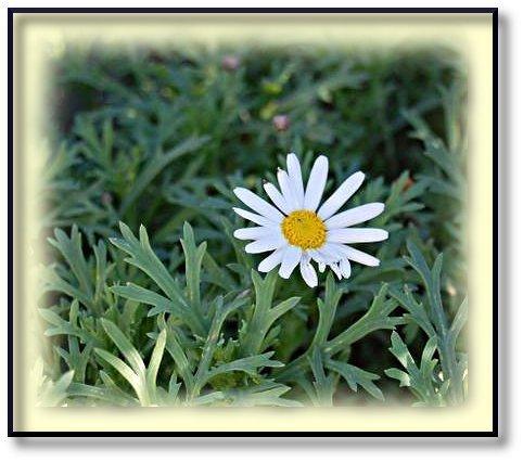 dimanche-fleuri-p-querettes-3.jpg