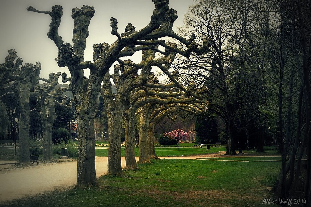 Le printemps des troncs