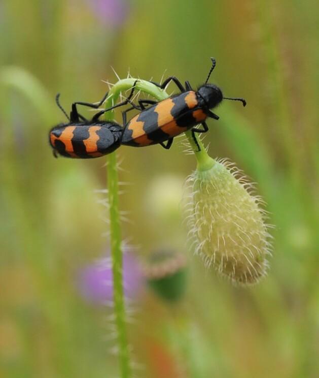 Insectes-papillons-5-9959.jpg