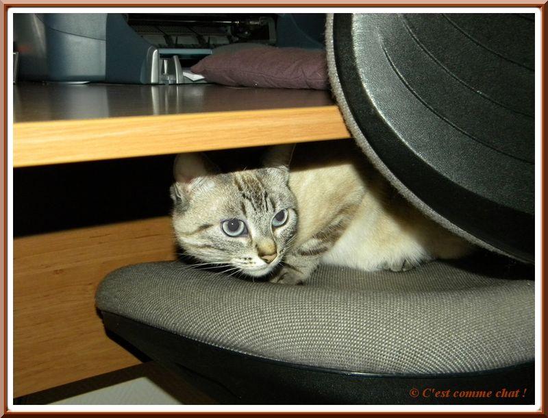 A cache cache sous le bureau cest comme chat !