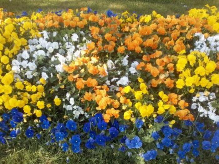le printemps fleuri