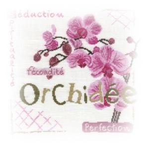L'Orchidée de Lilipoints fin