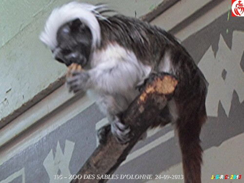 ZOO DES SABLES D'OLONNE  3/9   20/03/2014