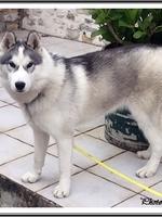 Okami (presque 8 mois)