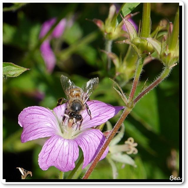 Méli-mélo floral