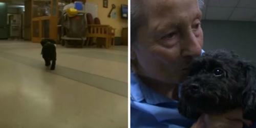 (-*♥*-) Ce tout petit chien fait chaque jour quelque chose qui donne les larmes aux yeux aux gens