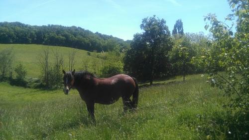 0210 Balade à cheval