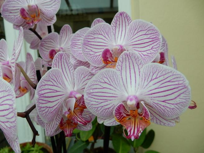 Les orchidées partie 1
