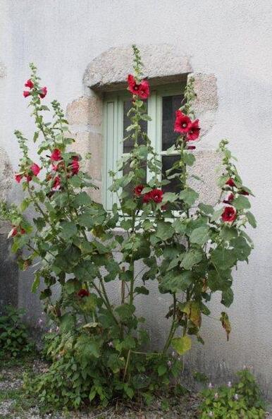 St Etienne-du-Bois (39)