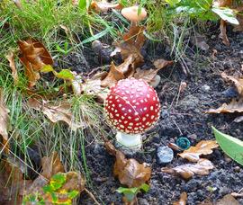 jeudi 27 - le champignon de la Bernardière