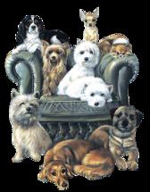 special chiens