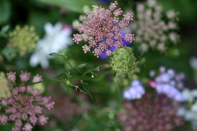 Mini-jardin de fleurs à couper