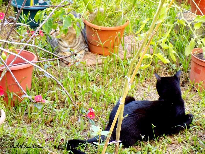 Biscotte et Xena tranquille dans le jardin