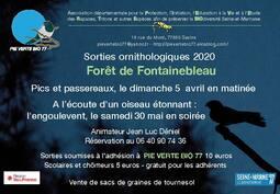 • Pics et passereaux en forêt de Fontainebleau