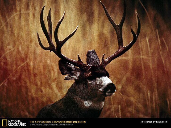 10 Images de Natl. Geographic 2