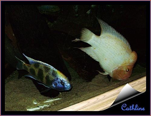 poissons à identifier
