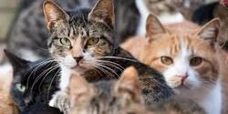 Trois chats sont euthanasiés chaque jour à cause de la surpopulation féline