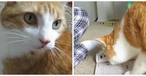 Un chat aide sa maîtresse à faire ses mots croisés