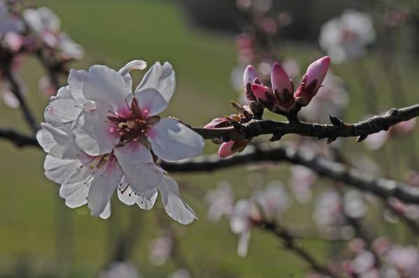 Fleurs-10 1374