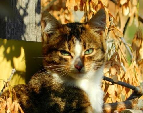 chat-d-automne-3.jpg
