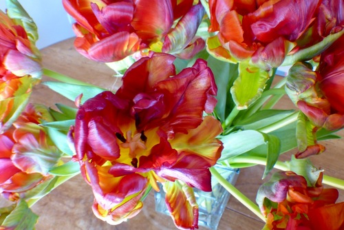 Tulipes perroquet, suite...