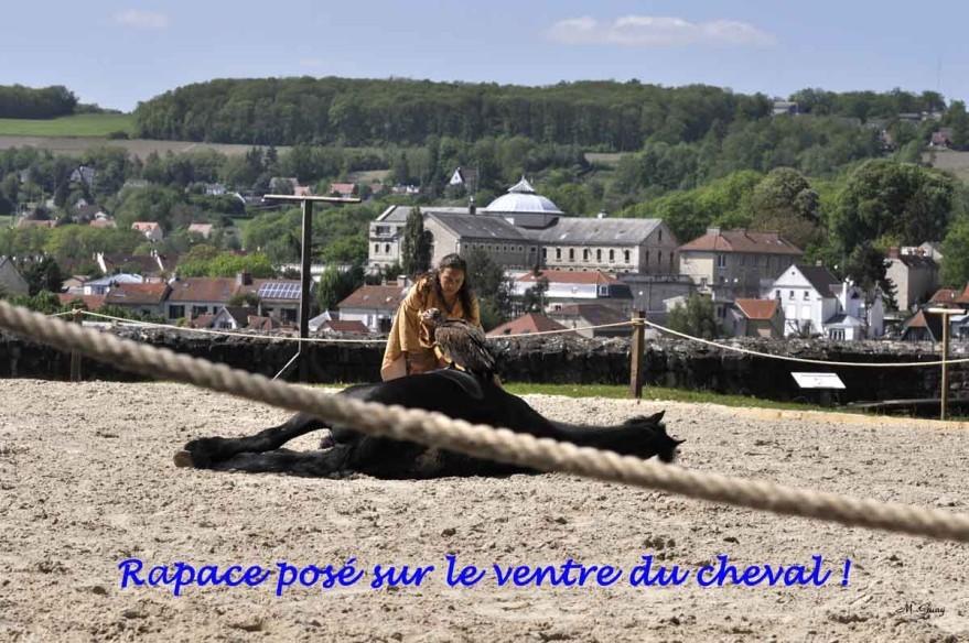 cavaliere-rapace-4038.jpg