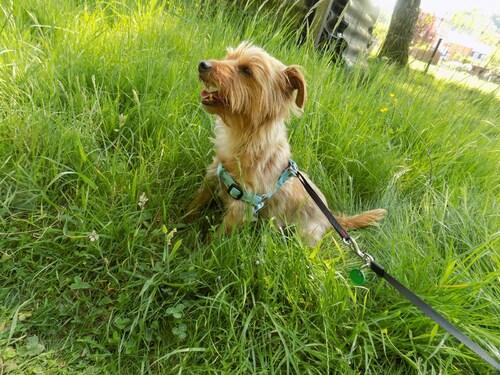 Woopy dans l'herbe