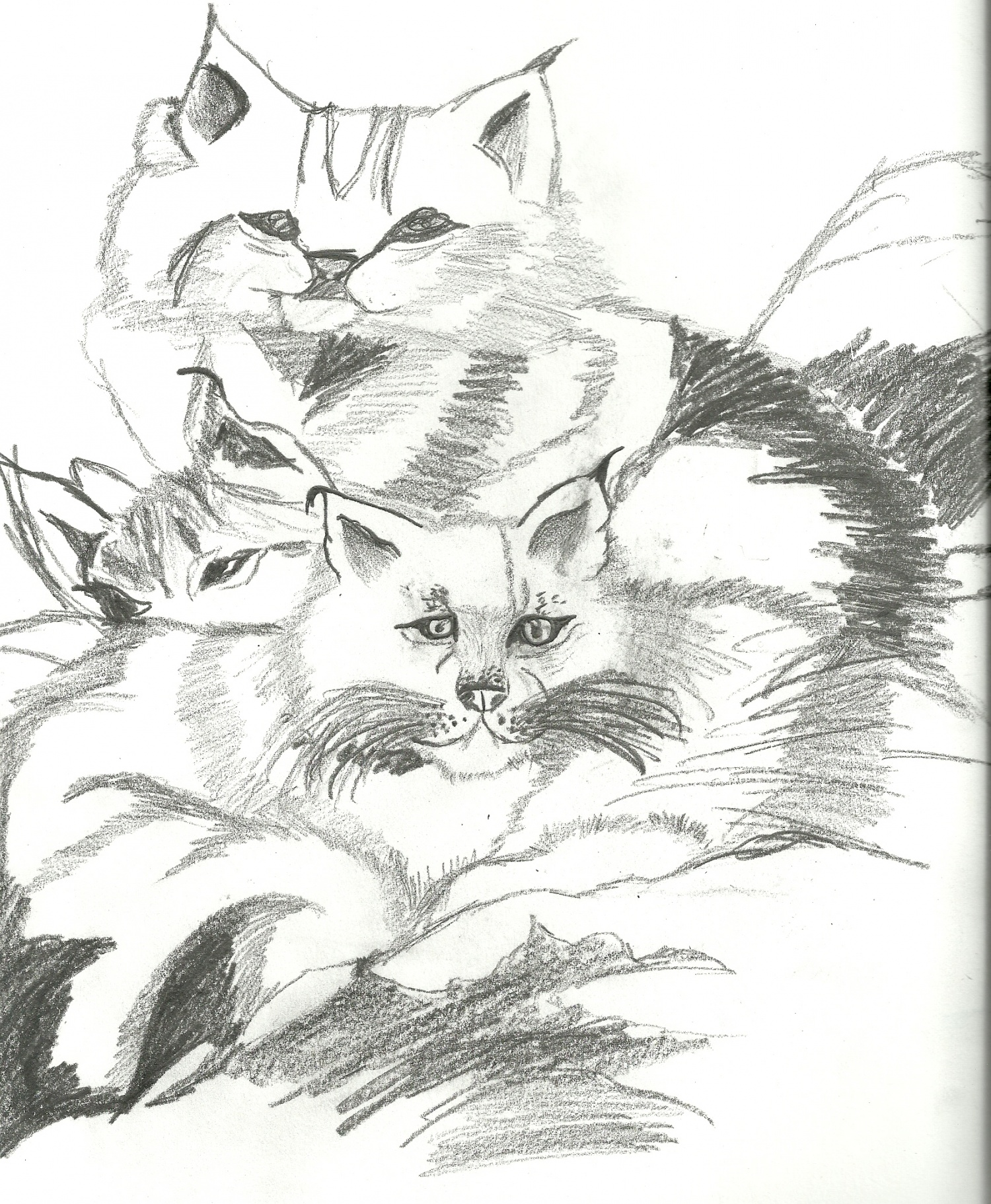 Lynx Triplés