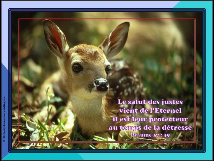 Il est leur protecteur - Psaumes 37 : 39