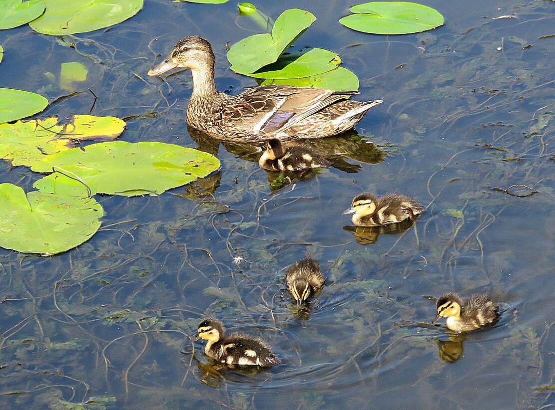 une belle famille sur l'eau